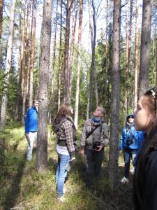 Metsapäev